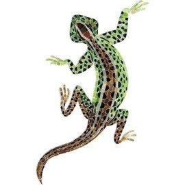 APM - Lizard